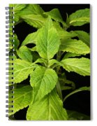Diviners Sage Spiral Notebook