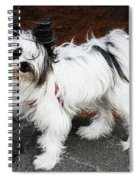 Dog At The Port Of Olympia Spiral Notebook