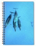 Dolphins At Rest Spiral Notebook