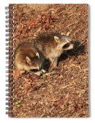 Green Heron Babies Spiral Notebook