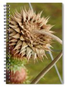 Dried Up Thistle Spiral Notebook