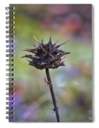 Dry Thistle Spiral Notebook