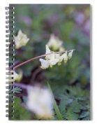 Dutchman's Breeches 3 Spiral Notebook