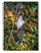 Eastern Gray Squirrel Spiral Notebook