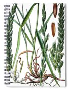 Elymus Repens, Commonly Known As Couch Grass Spiral Notebook