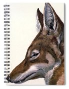 Ethiopian Wolf, Endangered Species Spiral Notebook