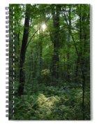 Evening Woods Spiral Notebook