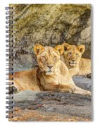 Female Lion And Cub Hdr Spiral Notebook
