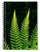 Fern Close-up Nature Patterns Spiral Notebook