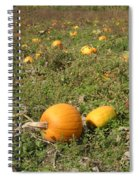 Field Of Pumpkins Spiral Notebook
