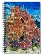 Fiji, Day Octopus Spiral Notebook