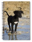 Fishing Puppy Of Polynesia Spiral Notebook