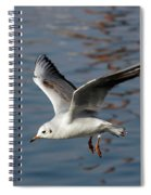 Flying Gull Spiral Notebook