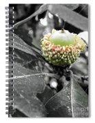 Found An Acorn Spiral Notebook