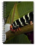 Frangipani Tree And Caterpillar Spiral Notebook