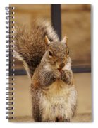 French Fry Eating Squirrel Spiral Notebook