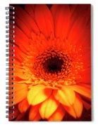 Gerbera Daisy Detail Spiral Notebook