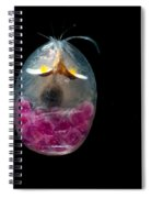 Giant Ostracod Spiral Notebook