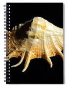 Giant Spider Conch Seashell Lambis Truncata Spiral Notebook