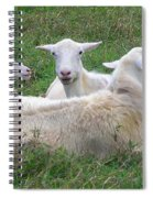 Goat Family Spiral Notebook