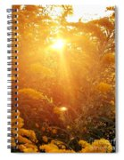 Golden Days Of Autumn Spiral Notebook