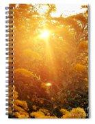 Golden Days Of Autumn Spiral Notebook