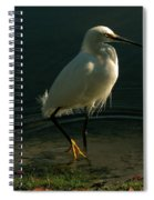 Golden Slippers Spiral Notebook