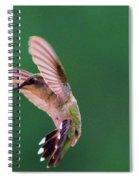 Grace Of A Hummingbird Spiral Notebook