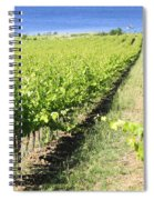 Grapevines In A Vineyard Spiral Notebook