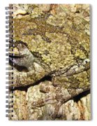 Gray Tree Frog Spiral Notebook