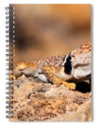 Great Basin Collared Lizard Spiral Notebook