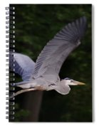 Great Blue Heron In Flight Spiral Notebook