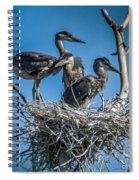 Great Blue Heron On Nest Spiral Notebook