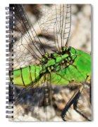 Green Dragonfly Closeup Spiral Notebook