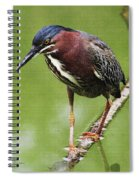 Green Heron At Gilbert Riparian Preserve Spiral Notebook