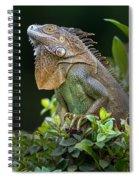 Green Iguana Iguana Iguana, Sarapiqui Spiral Notebook