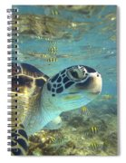 Green Sea Turtle Balicasag Island Spiral Notebook