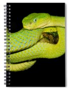 Guatemala Palm Pitviper Spiral Notebook