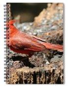 Hungry Cardinal Spiral Notebook