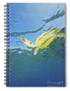 Hawaii, Green Sea Turtle Spiral Notebook