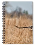 Hawk Soaring Over Field Spiral Notebook