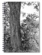 Heaven's Tree Spiral Notebook