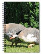 Helmeted Guineafowl Spiral Notebook