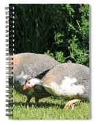 Helmeted Guineafowl Spiral Notebook
