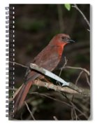 Hepatic Tanager At The Coba Ruins Spiral Notebook
