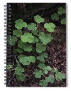 Hoh Rain Forest 3393 Spiral Notebook
