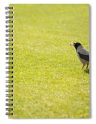 Hooded Crow Bird Gathering Hay Spiral Notebook