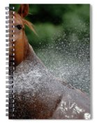 Horse Bath II Spiral Notebook