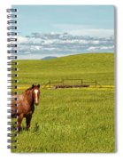 Horse Grazing Spiral Notebook