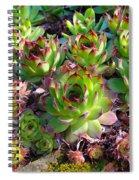 Houseleeks Spiral Notebook